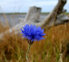 Lone Flower At The Beach by Debbie Stika