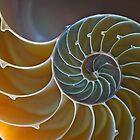 Nautilus Shell 2 by shuttersuze75