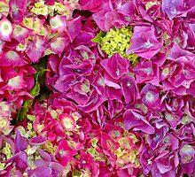 Hydrangeas by Karin  Hildebrand Lau
