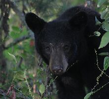 mama bear by Christopher  Ewing