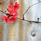 Japonica by Mandi Whitten