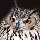European Eagle Owl by LisaRoberts