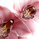Pink Orchids by Barb Leopold