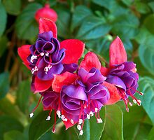 Fuchsia In The Fall by Maria Dryfhout