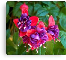 Fuchsia In The Fall Canvas Print