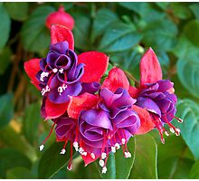 Fuchsia In The Fall Photographic Print