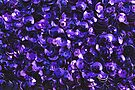 Purple Scattered Sequins by Avril Harris