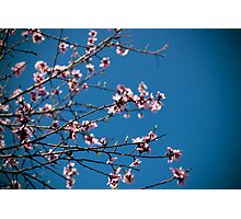Blossoming Photographic Print