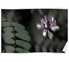 Crown Vetch Portrait Poster