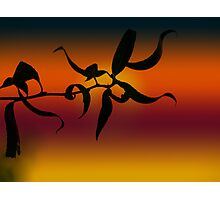 Curly Sunset Photographic Print