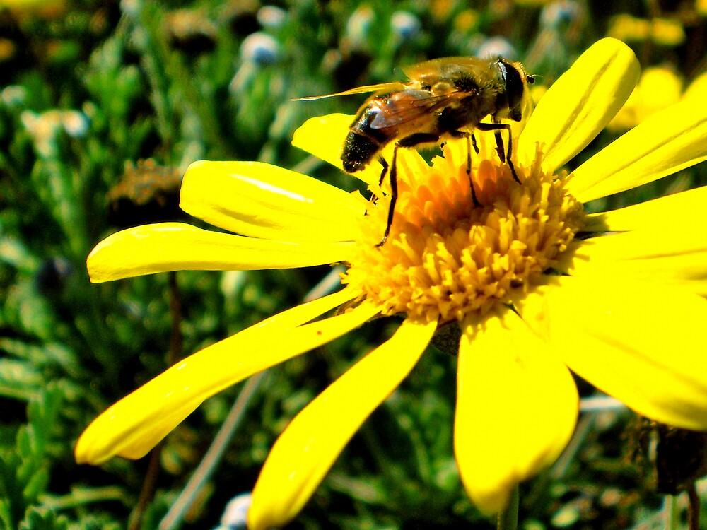 Bumble Bee by bobbijo07
