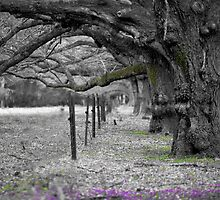 The Avenue by Andrew Bosman