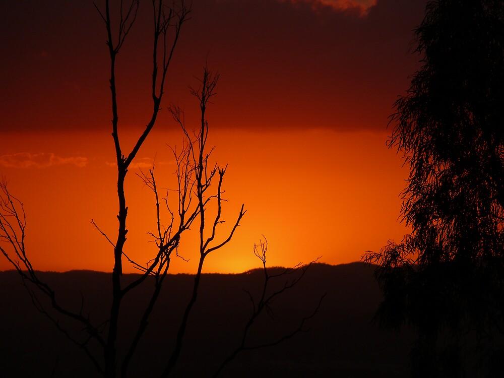 Outback in Brisbane by Josh Meggs