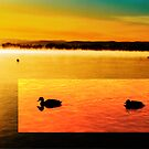 Ducks on Lake Burley Griffin by ArtbyCowboy
