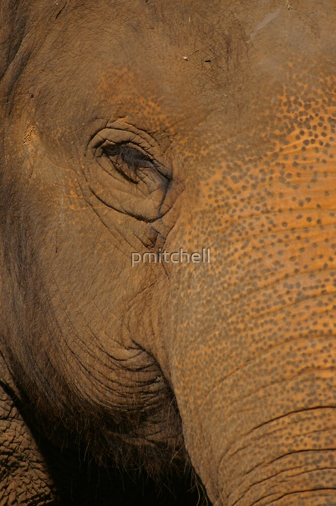 gentle giant by pmitchell