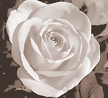Rose by jenny meehan