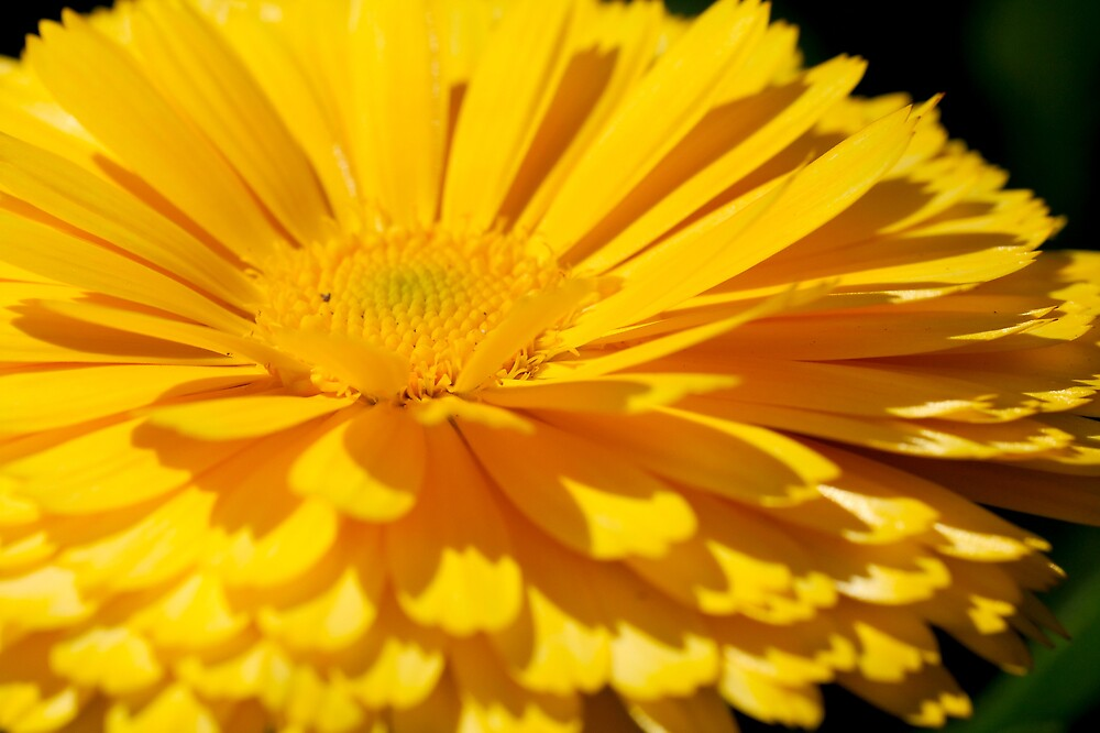 Flower of Yellow by PsiberTek