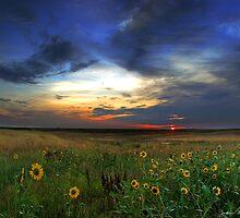 Wild Sunflowers of the Sunrise by John  De Bord Photography