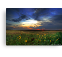 Wild Sunflowers of the Sunrise Canvas Print