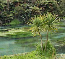 Te Waihou Springs  by Danielle Kennedy Boyd