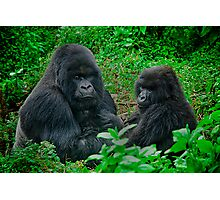 Silverback in Rwanda Photographic Print