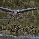 Take Off by TJ Baccari Photography
