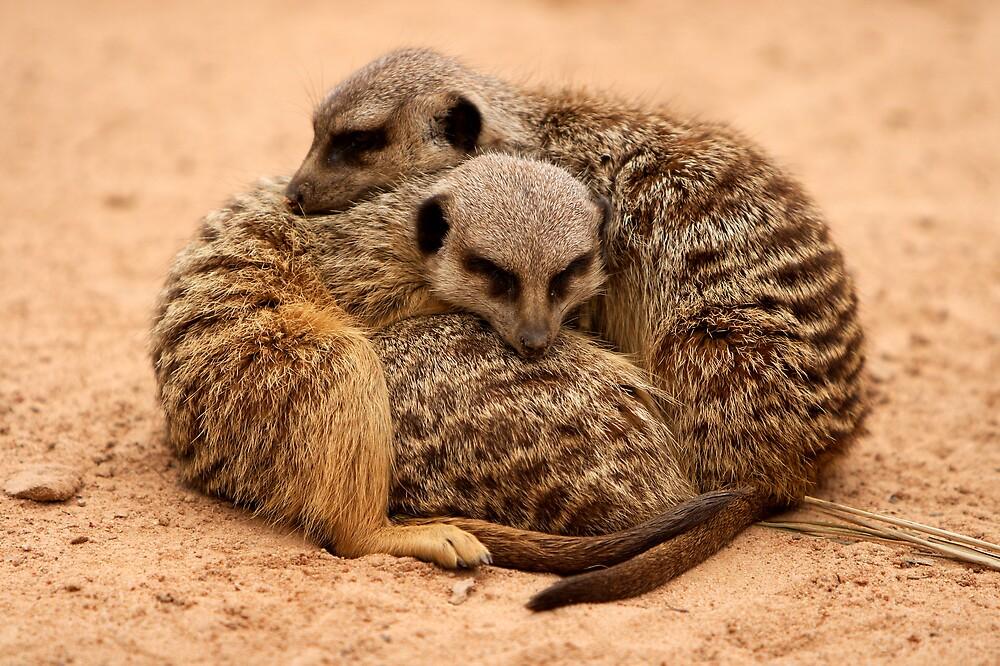 Meerkat Huddle by PsiberTek