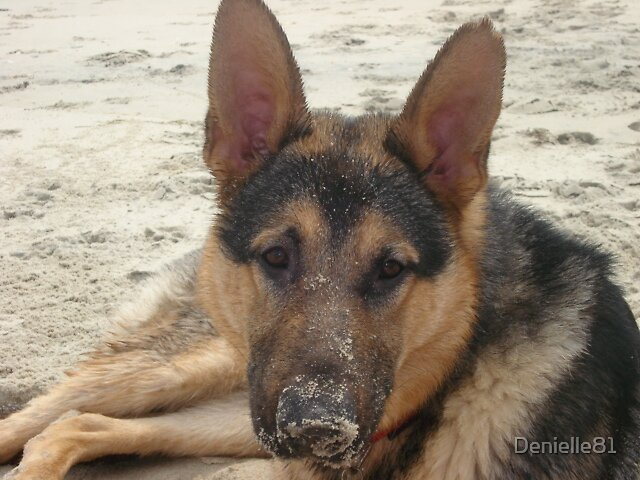 Sandy nose by Denielle81