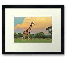 Giraffe - African Wildlife - The Rain is Coming Framed Print