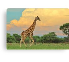 Giraffe - African Wildlife - The Rain is Coming Canvas Print