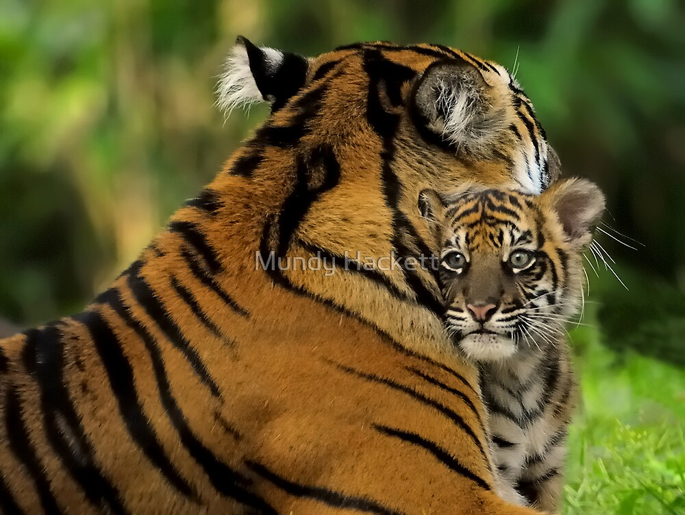 Mother's Love by Mundy Hackett