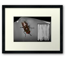 Fly Upon The Wall Framed Print