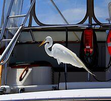 All Aboard! by Wrayzo