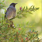 Birdsong  by Kim Roper