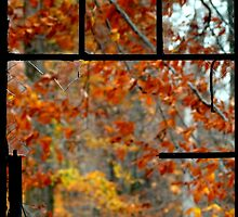 Looking out on Fall's Beauty by Carla Jensen