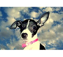 Phoebe in the sky Photographic Print