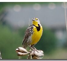 Birdie by Olaide