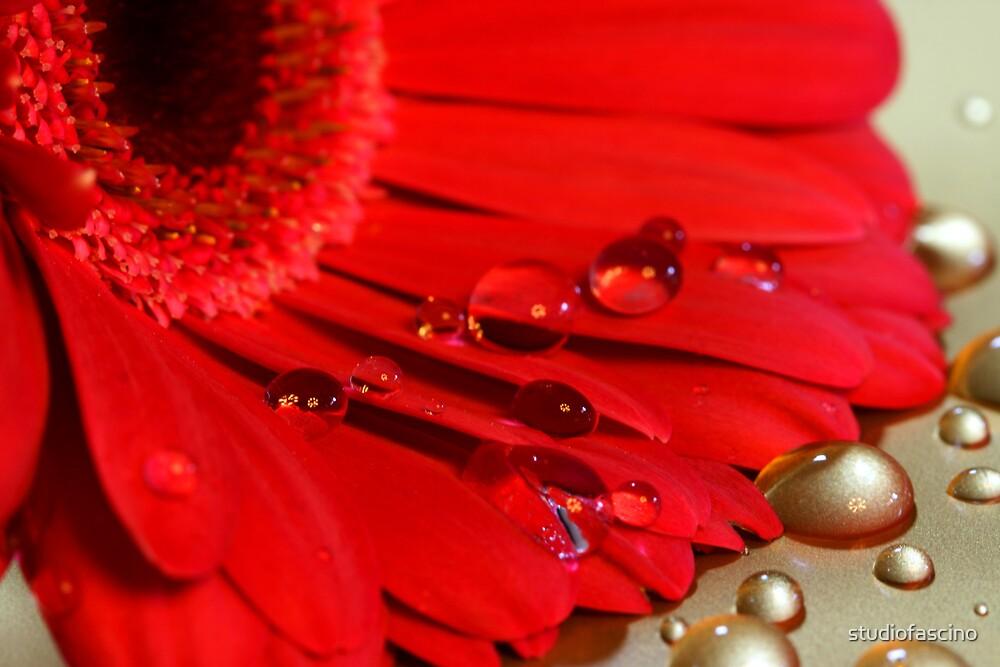 wet by studiofascino