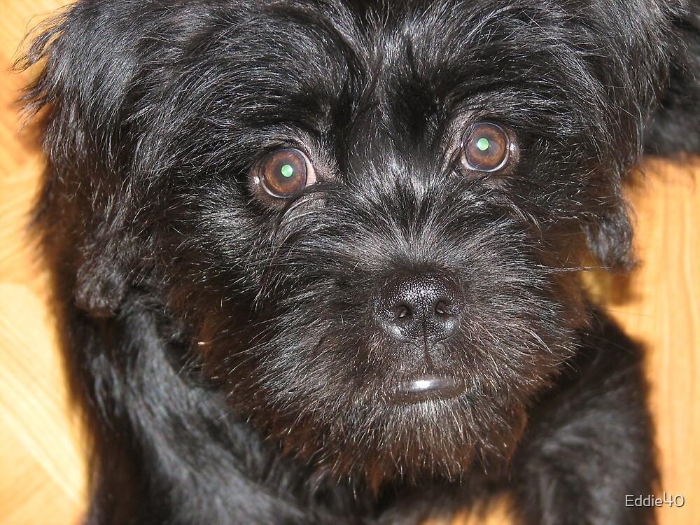 Hapy Puppy by Eddie40