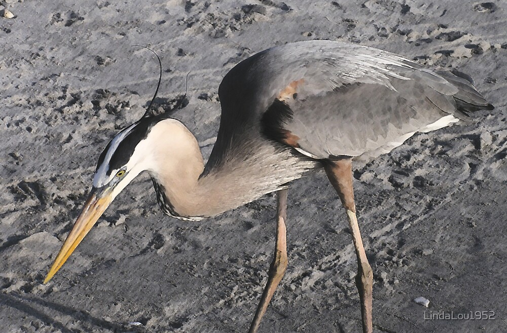 Asian Style Heron by LindaLou1952