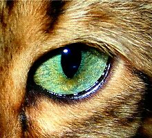 Zen's Eye by quin10