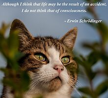 Schrödinger Cat by AlexFHiemstra
