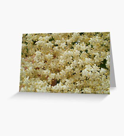 Elder flowers Greeting Card
