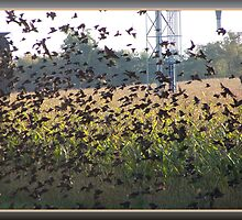 The Field Of Wings by Starr1949