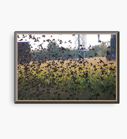 The Field Of Wings Canvas Print