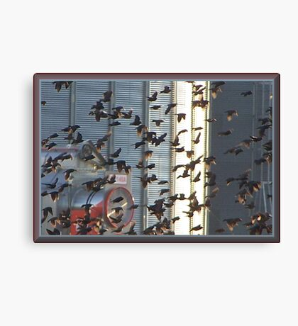 Frantic Fliers Canvas Print