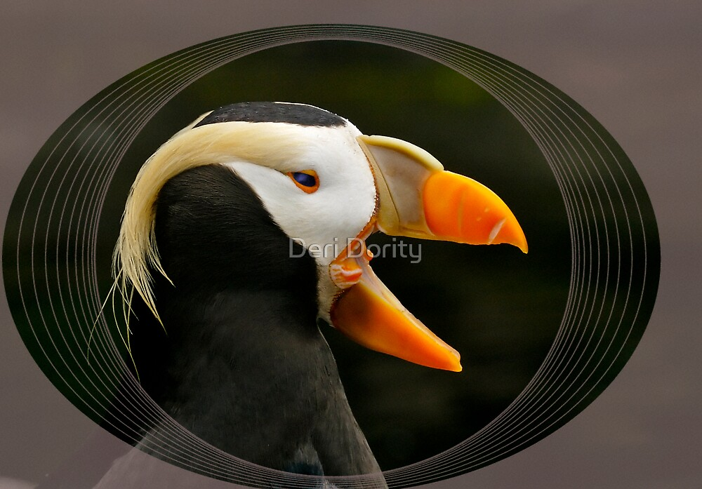 Puffin Laughing by Deri Dority