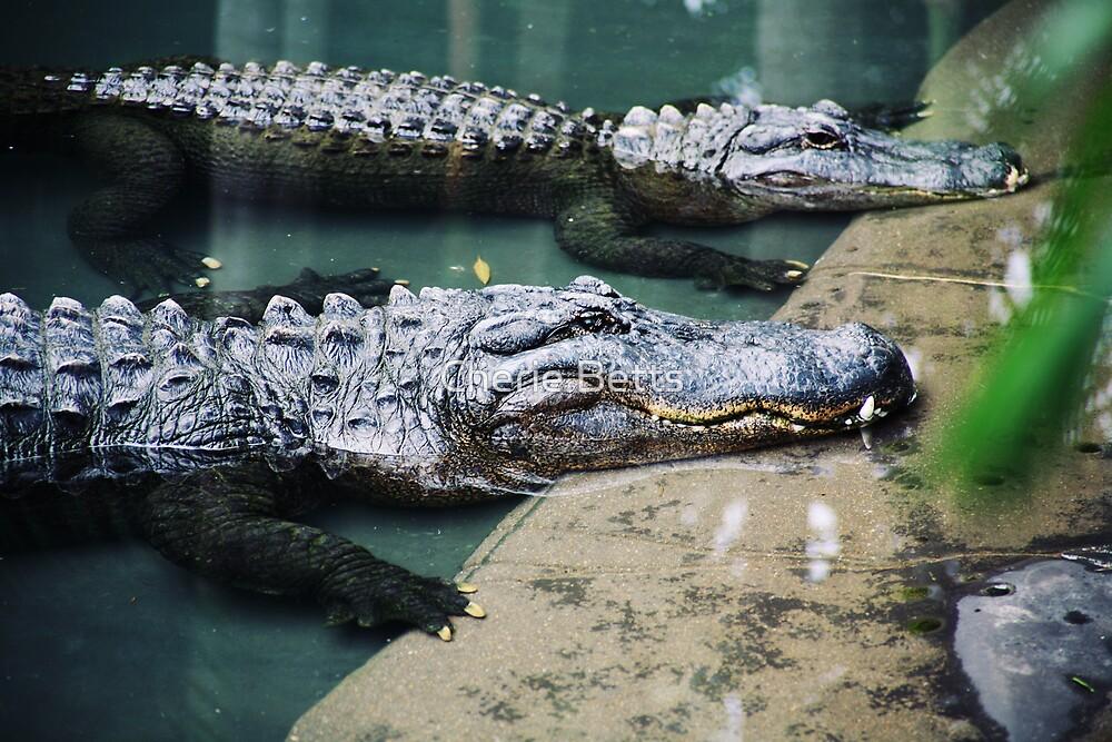 Crocs by Cherie Betts