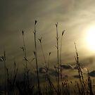 November Skies by WildThingPhotos