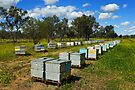 Bee boxes near Moree by Darren Stones